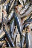 Стойка рыб в уличном рынке Стоковые Фото