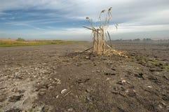 стойка сезона звероловства утки Стоковые Изображения RF