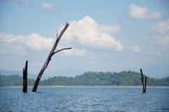 Стойка смерти дерева в озере Стоковое Фото