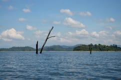 Стойка смерти дерева в озере Lan Cheow на Ratchaprapa или Rajjaprabha Стоковое фото RF