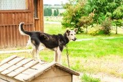 Стойка собаки на псарне Стоковое Фото