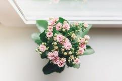 Стойка цветка на белом силле окна стоковые изображения rf