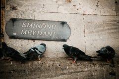 Стойки голубей на каменной стене в индюке стоковые изображения rf