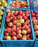 Стойл плодоовощ на местном рынке Стоковые Изображения RF