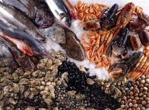 стойл shellfish продуктов моря Стоковое Изображение