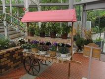 Стойте с различными красочными цветками бака для дома и сада Стоковая Фотография RF