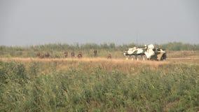 Столбец русских войск на патруле в Чечня сток-видео