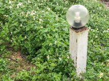 Столб лампы и зеленая трава Стоковая Фотография