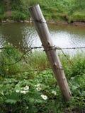 столб маргаритки Стоковые Фотографии RF