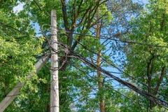 Столб с проводами в деревьях стоковая фотография rf