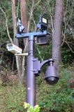 Столб фары с камерой CCTV Стоковое фото RF