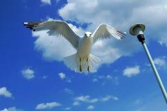 столб чайки Стоковое Фото
