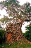 Столица всемирного наследия висков САМБО PREI KUH Chenla размещала в провинции Камбодже thom Kampong Стоковое Фото