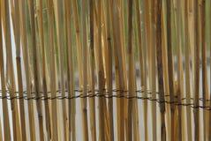 сторновка загородки Стоковое Изображение RF