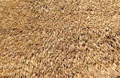 сторновка крыши Стоковые Фотографии RF