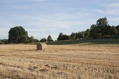 Сторновка на поле Стоковая Фотография RF