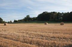 Сторновка на поле Стоковые Фотографии RF