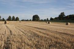 Сторновка на поле Стоковое Изображение