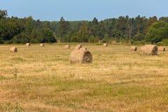сторновка поля bales Стоковые Изображения RF