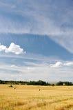 сторновка поля bales Стоковые Изображения