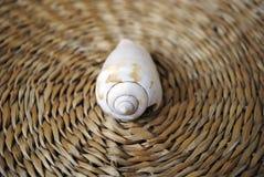 сторновка раковины моря циновки стоковое изображение rf