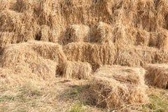 сторновка сельской местности Стоковое Изображение