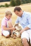 сторновка сынка отца собаки bales сидя Стоковое Изображение