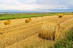 Сторновка тюкует около моря в Нормандии Стоковые Изображения RF