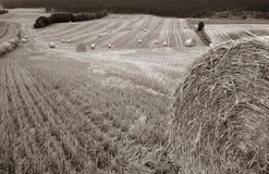 сторновка хлебоуборки поля bale Стоковые Изображения RF
