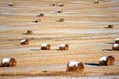 сторновка хлебоуборки bales Стоковая Фотография RF