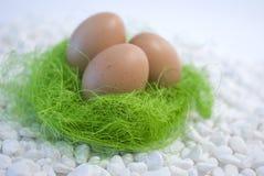 сторновка яичек зеленая стоковые изображения