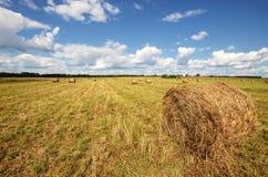 сторновка bales круглая Стоковая Фотография RF