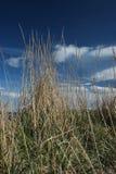 Сторновки на sanddunes Стоковые Изображения