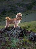 Сторожевой пес Стоковое Изображение RF