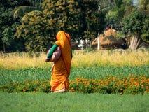 Сторона Бенгалии Стоковое Изображение RF