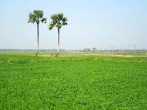 Сторона Бенгалии Стоковые Изображения RF