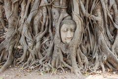 Сторона Будды среди корней стоковые фото