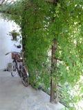 сторона велосипеда на предпосылке заводов зеленой Стоковые Фотографии RF