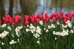 Сторона воды цветка Стоковое Изображение