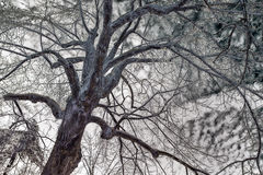 Сторона в дереве покрытом льдом - перевернутый цвет Стоковое Изображение RF