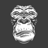 Сторона гориллы изолированная на белизне иллюстрация штока