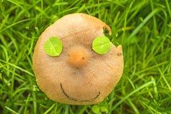 Сторона гриба Стоковое Фото