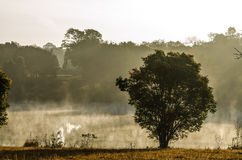 Сторона дерева лагуна в тумане утра Стоковое Фото