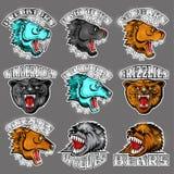 Сторона зверя от стороны и вида спереди с оголенными зубами Пантера, кугуар; медведь, волк, polarbear, гризли, хищник иллюстрация штока