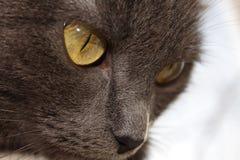 сторона зла кота Стоковые Фото