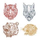 Сторона коричневых гризли, леопарда и ягуара Портрет волка Челюсти тигра Голова дикого животного анимизма иллюстрация штока