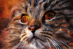 Сторона кота демона Стоковое фото RF