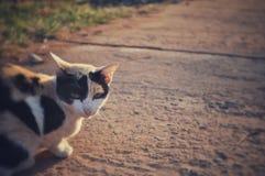 Сторона кота со светом утра стоковые изображения rf