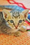Сторона кота стоковое изображение