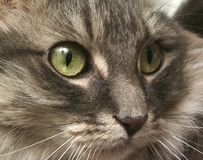 сторона кота Стоковые Изображения